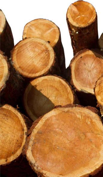Immagine legno